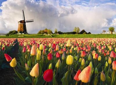Голландия[1]