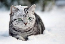 1354811049_youloveit_ru_snow_cats03[1]